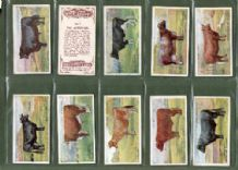 Tobacco cigarette cards British Live-stock 1915 cows, horses, sh